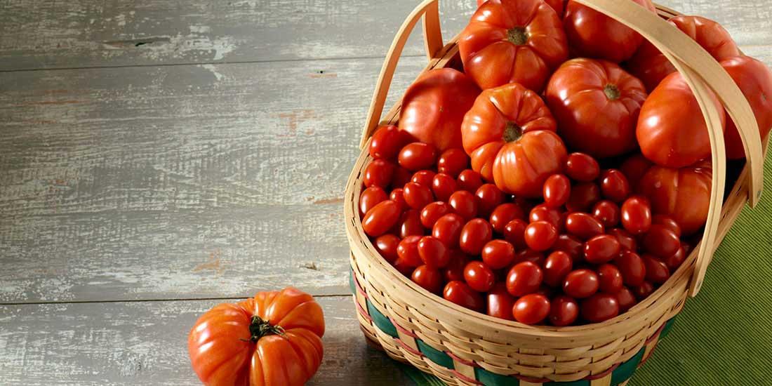 Как правильно собрать и сохранить семена помидоров 42